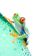 red-eyed tree frog on a water bottle with water droplets