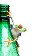 Leinwanddruck Bild frog on a bottle - a red-eyed tree frog isolated on white