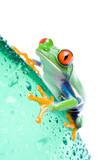 Fototapete Wasser - Flasche - Reptilien / Amphibien