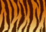 A fluffy skin of a tiger poster