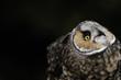 An owl looks up