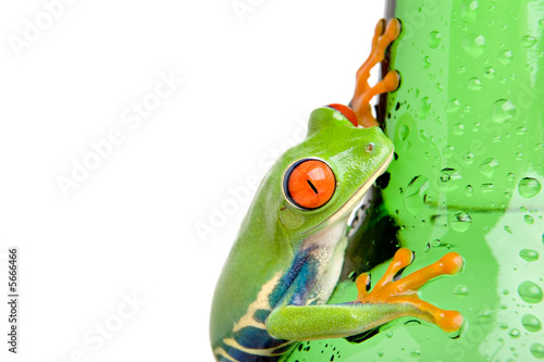 Leinwanddruck Bild frog on a wet bottle closeup, isolated on white.