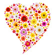 Valentine heart made from colorful spring daisies.