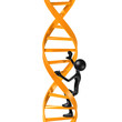 Climbing DNA Ladder