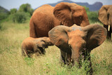Herd of elephants including young ones in Kenya Africa. poster