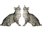 gatos poster