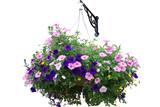 Fototapety Flower basket isolated on white