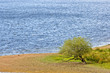A solitary tree in a peaceful lake of Scotland