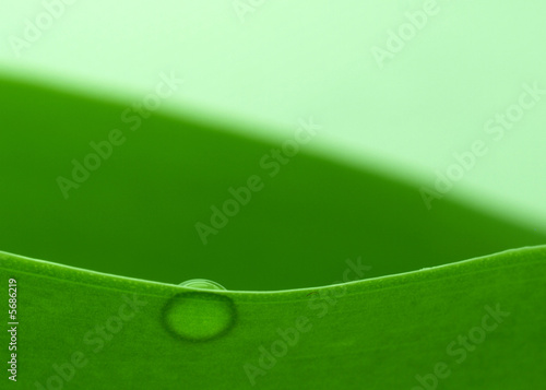 canvas print picture Water drop on a plant leaf