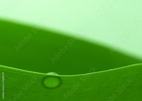 Leinwandbild Motiv Water drop on a plant leaf