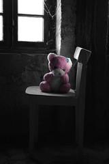 Lonely, little teddy bear