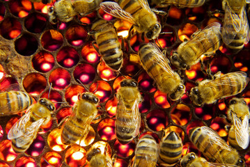 Bees inside a beehive