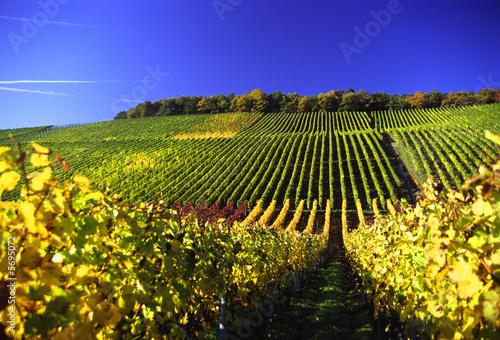 Weinberg im Herbst, Franken, Deutschland,
