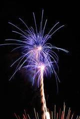 Purple palm fireworks