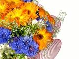 Vibrant flowers poster