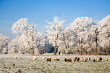 cattle of sheep in a frozen landscape poster