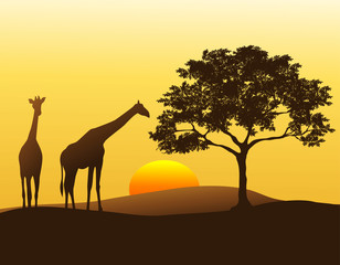 A pair of giraffes silhouetted against the sunset in Africa