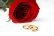 Rose and engagement rings as a symbol of Valentine day