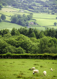 View from the offas dyke long distance footpath  poster