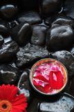 Aromatherapy spa flower petals, gerber daisy on rocks poster