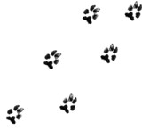 black dog paw prints on white background poster