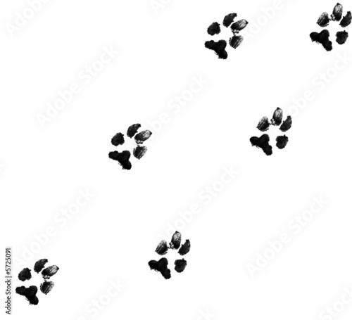 Leinwandbild Motiv black dog paw prints on white background