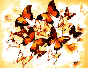 Red butterflies - illustration with photo