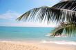Palm tree seen on tropical beach