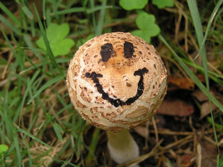 mushroom with a happy smiley face drawn onto it