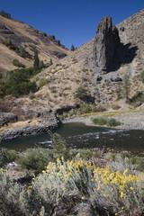 Yakima River Desert Yellow Flowers, Washington