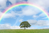Fototapety Solitary Oak and Rainbow