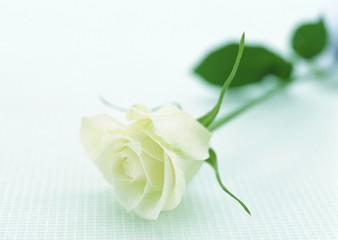 Gorgeous Flower 1