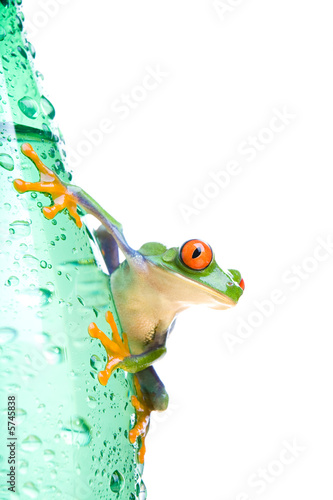 Leinwanddruck Bild tree frog on water bottle - a red-eyed tree frog