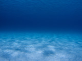 Underwater scene in the Caribbean Sea