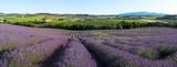 Fototapety panoramique - Champ de lavande en Provence