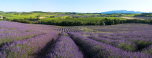 Panorama - Fachrichtung Lavendel in der Provence