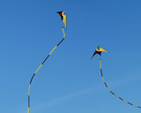 Two colourful stunt-kites flying on a blue sky background poster