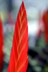 pianta fiore
