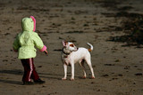 child playing with dog on beach