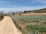 campo en primavera poster