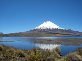 Vulkan Parinacota am Chungara See, Altiplano, Chile