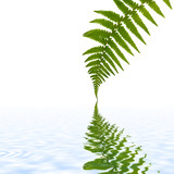 Fern Leaf Simplicity poster