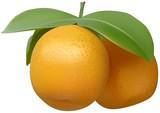 Tangerine - detailed realistic illustration poster
