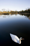 The river avon warwick warwickshire england uk poster