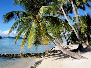 Cartolina Polinesiana