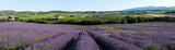 Fototapety vue panoramique champ de lavande en Provence