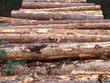 Timber dealer