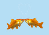 Gold fish kissing creating a heart of bubbles. poster