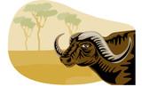african buffalo with safari bacground poster