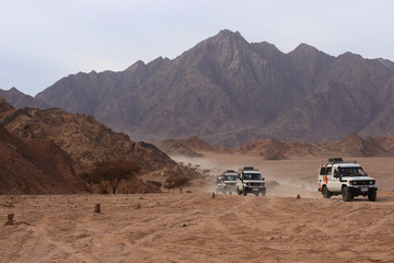 Safari in Sinai peninsula, Egypt